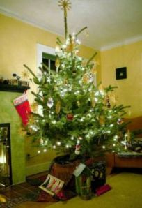 230px-living_christmas_tree_247