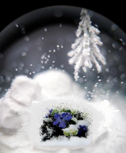 snowflowersorta