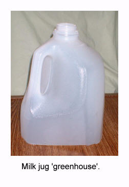 milkjuggreenhouse