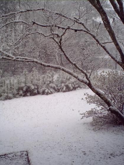 snow-in-ga